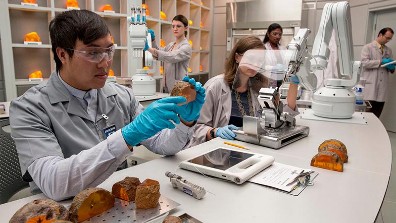 Cientistas recolhendo material genético de âmbares.
