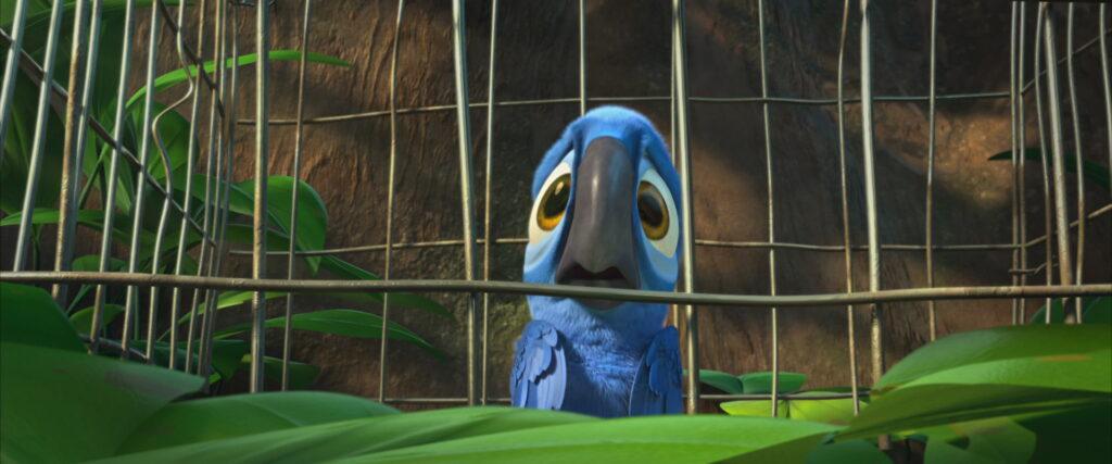 A ave filhote quando foi capturada na natureza.