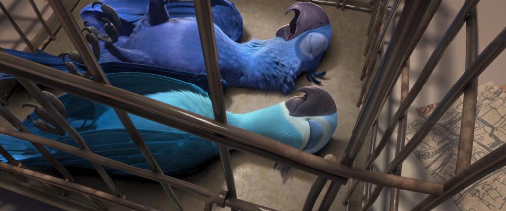 As araras-azuis sequestradas.